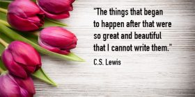 Pink tulips laying on wood surface - C.S. Lewis quotes about great and beautiful - Famous Quotes About Writing